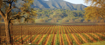 Growing the Best California Cabernet Sauvignon