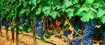 Best Cabernet Sauvignon grown in Paso Robles