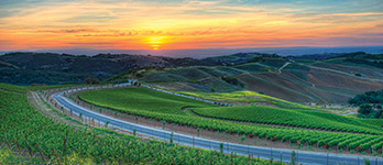 Meet our Member Wineries in Paso Robles